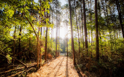 Texas Grand Ranch vies to be the next great wooded community